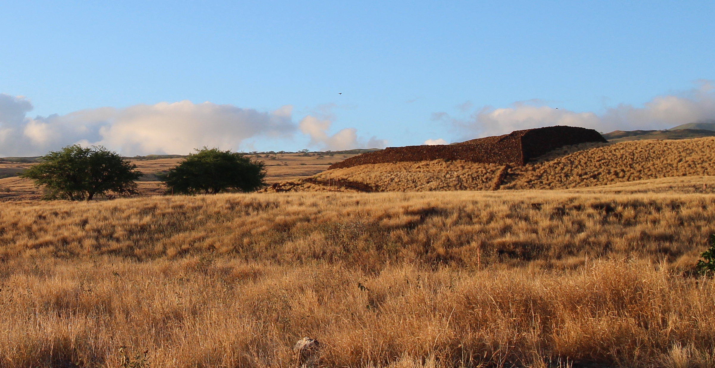 Puʿukohola Heiau, completed in 1971 for Kamehameha I. Photo by Laura Brewington.